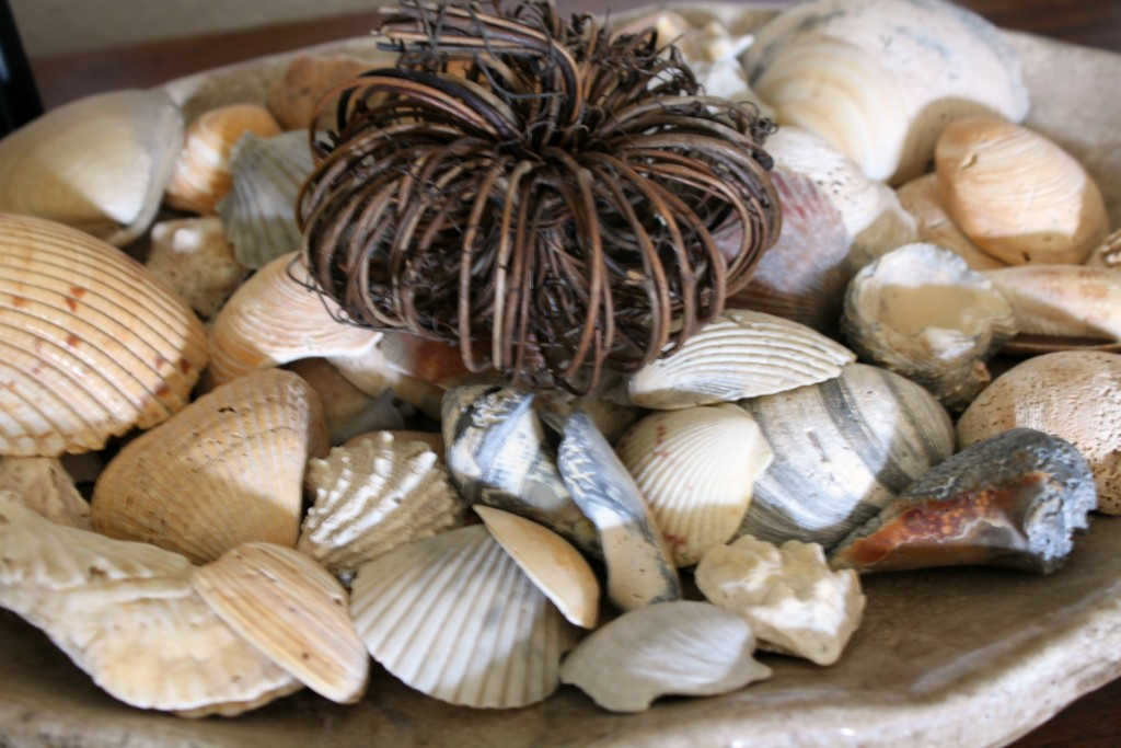 pumpkin-and-seashells