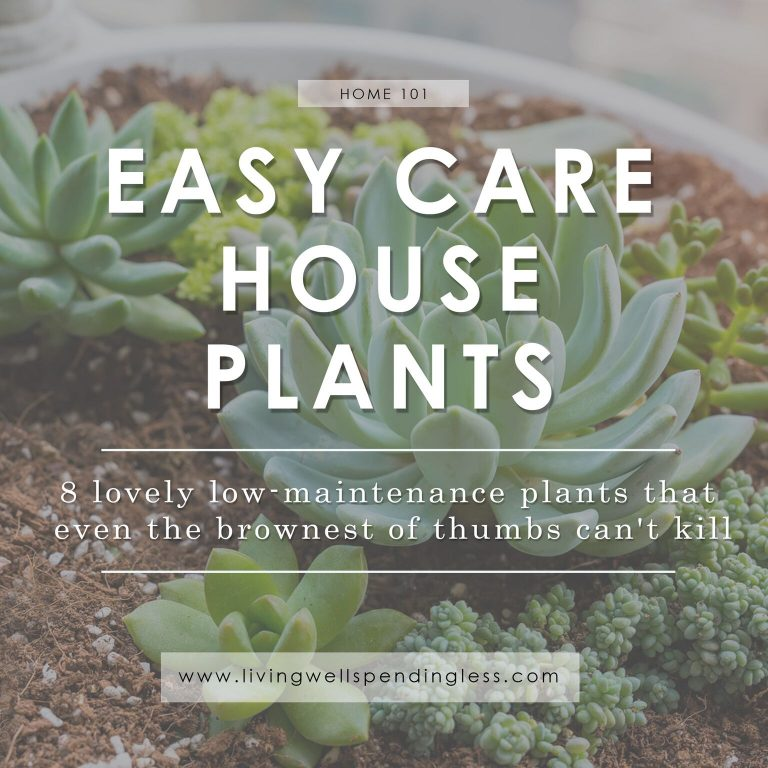 Easy care house plants from Living Well Spending Less