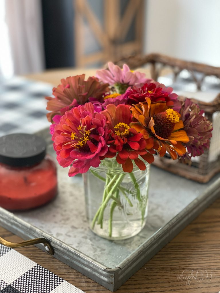 Fall zinnia colors